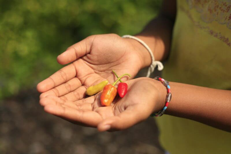 Cupped hands hoping spicy peppers - Indigestion